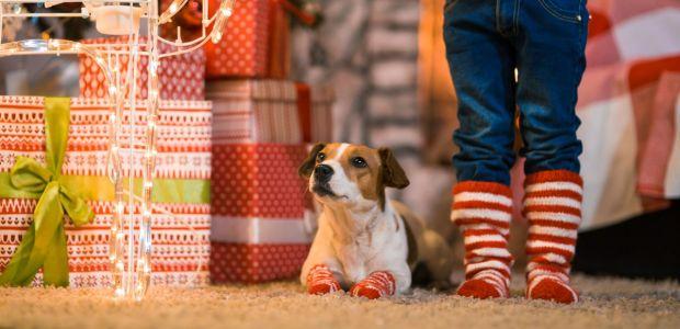 Skarpetki świąteczne dla dzieci w różnym wieku [Przegląd]