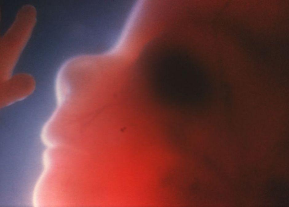 16 tydzień ciąży, zdjęcia ciąży, zdjęcia płodu