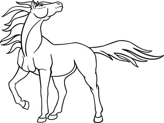 kolorowanka konie sylwetka prawdziwego konia