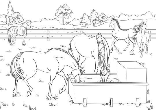 kolorowanka konie w gospodarstwie
