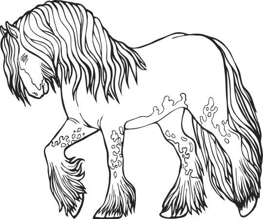 kolorowanka koniec koń z kudłatymi nogami