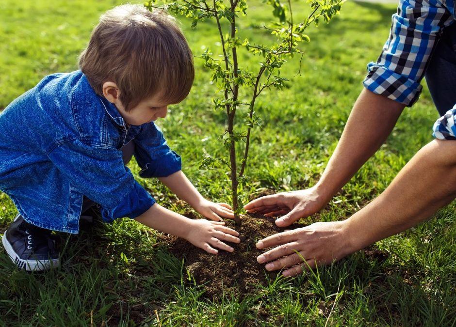 Akcja sadzenia drzew z okazji urodzenia dziecka