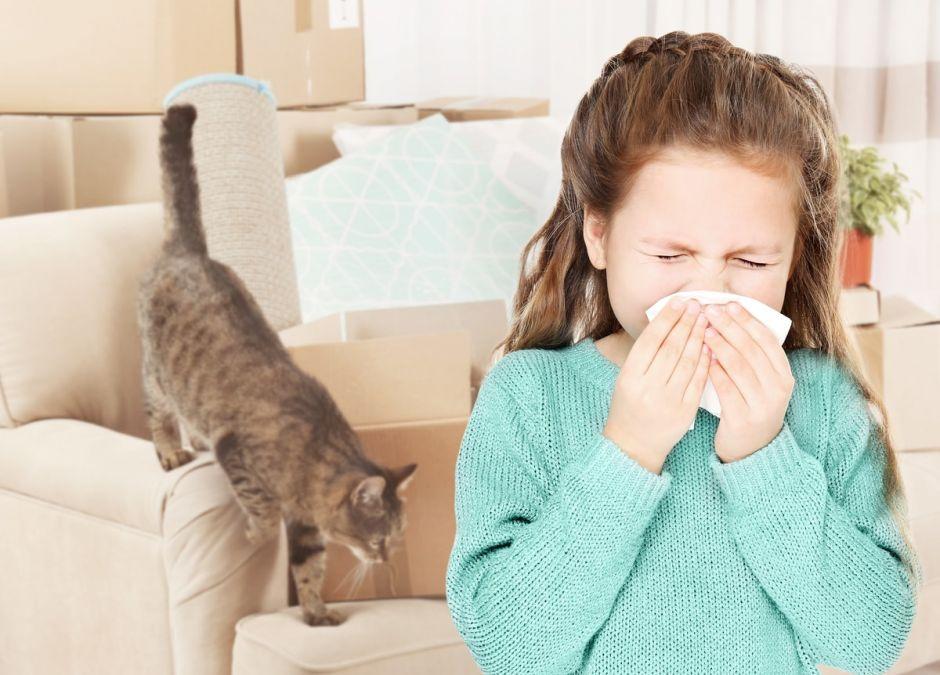 alergia na kota