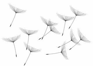 alergia, wiosna, pyłki