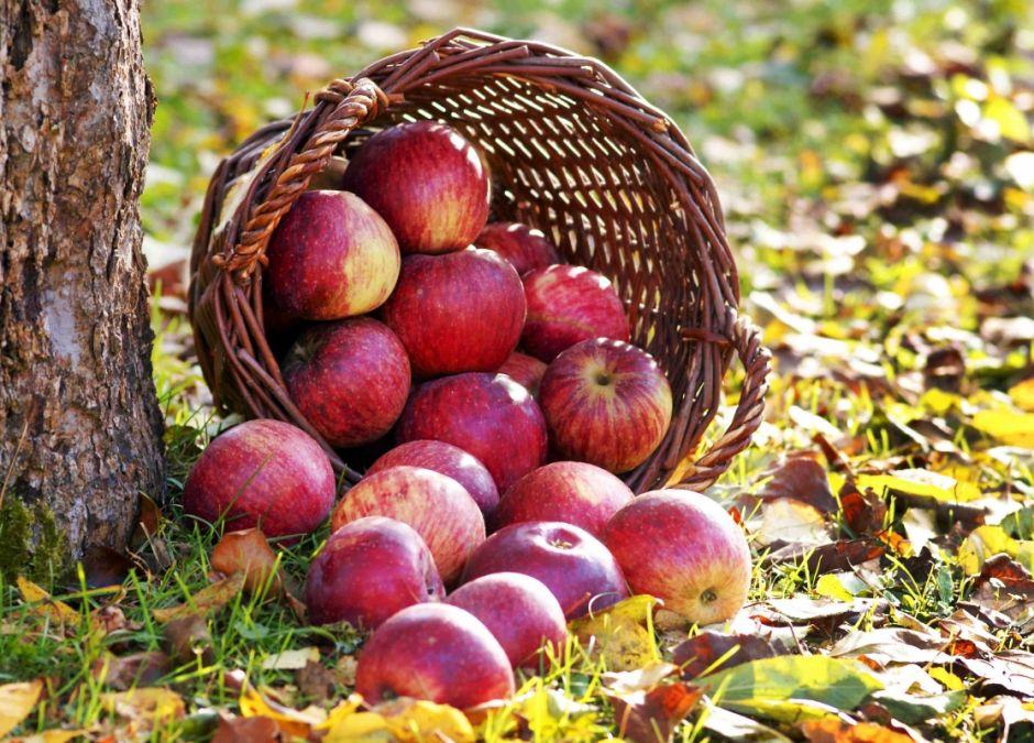 alergie krzyżowe, jabłka, alergia na jabłka, uczulenie na owoce, alergeny krzyżowe, alergia pokarmowa, alergia u dziecka