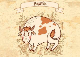 bawół, horoskop chiński, horoskop dla dziecka