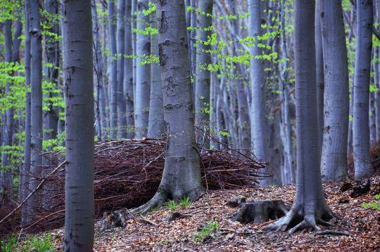 bieszczady atrakcje dla dzieci bukowy las