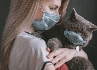 Chińscy naukowcy przestrzegają – koronawirus może występować u kotów!