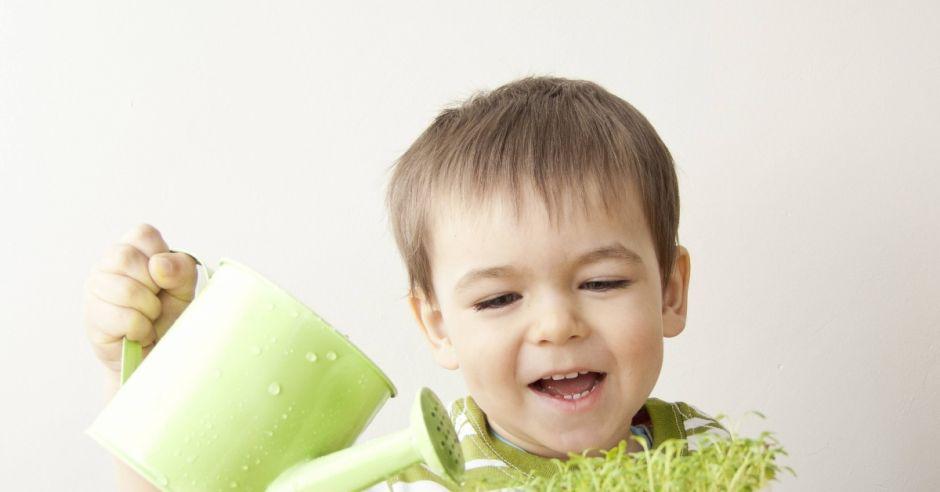 Chłopiec podlewa rzeżuchę