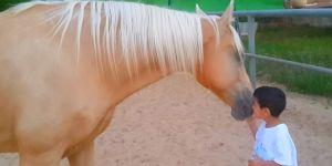 chory chłopczyk zbliżył się do konia