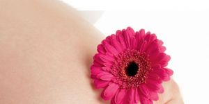 ciąża, brzuszek, kwiatek, gerber