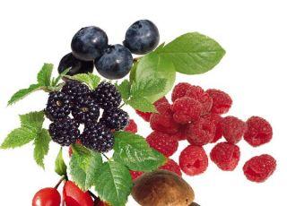 dary lasu, grzyby, jeżyny, jagody, maliny, dzika róża