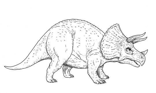 dinozaury kolorowanka triceratops