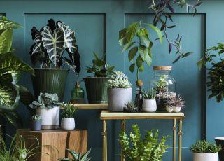 Doniczkowe rośliny domowe
