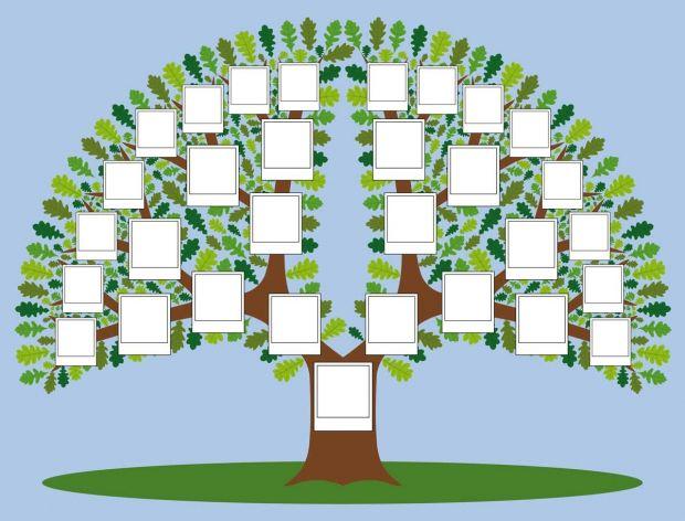jak zrobić drzewo genealogiczne - wzór