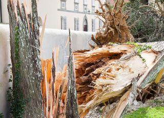 drzewo powalone burza