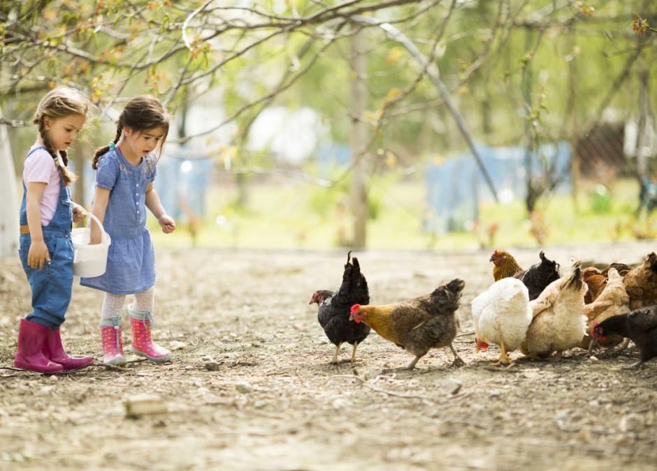 dzieci na wsi