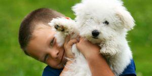 Jakie zwierzę dla dziecka?