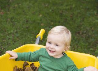 dziecko, jesień, liście, taczka