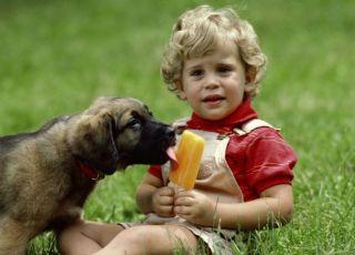 dziecko, pies, lody