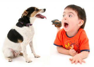 Pies dla przedszkolaka