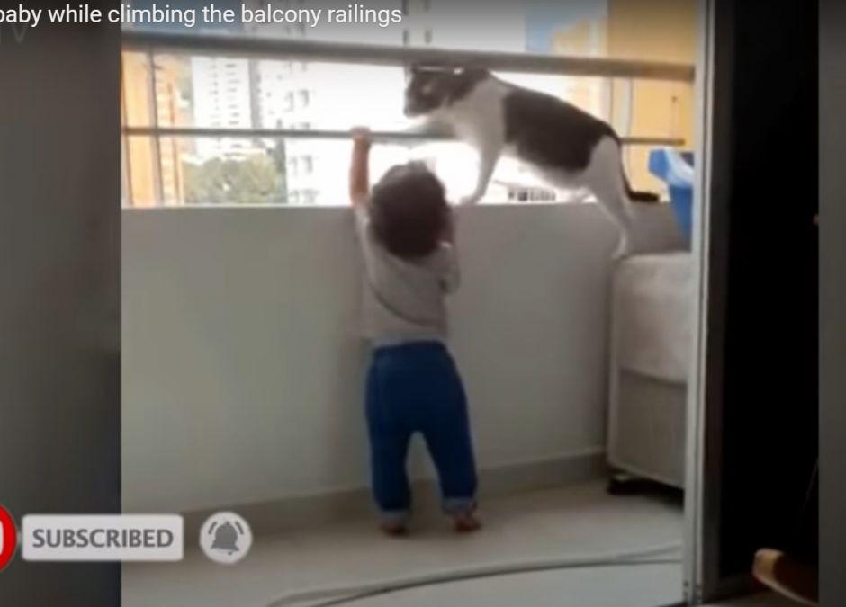 Dziecko próbowało się wspiąć na barierkę balkonu. Uratował je kot