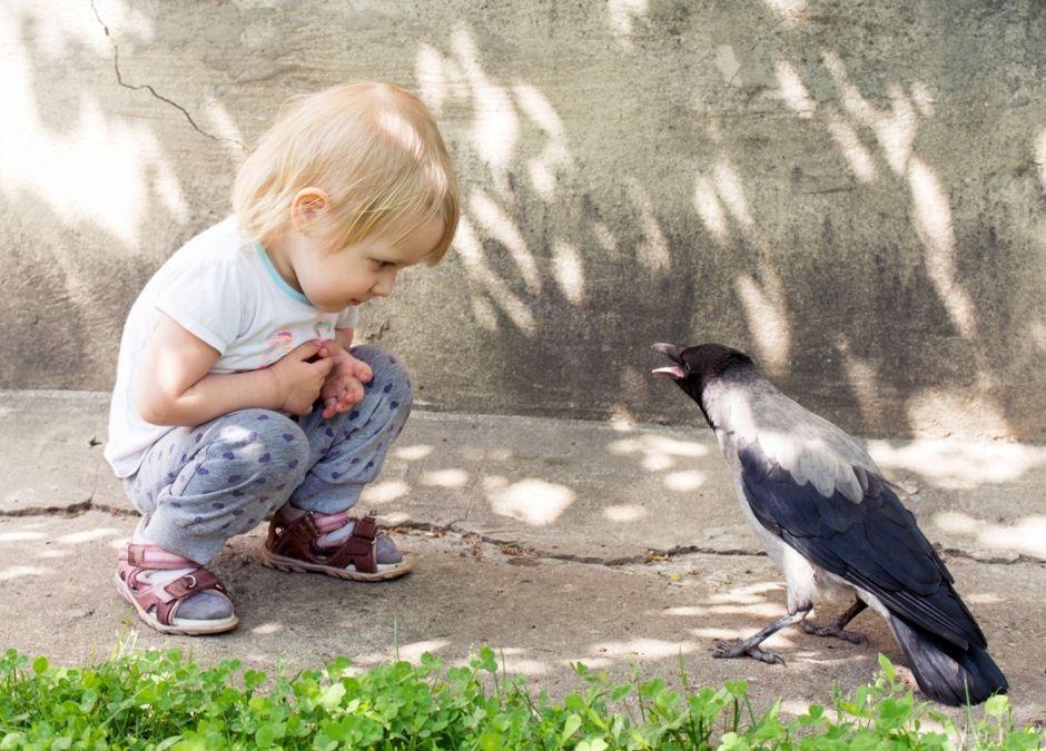 dziecko próbuje zbliżyć się do wrony
