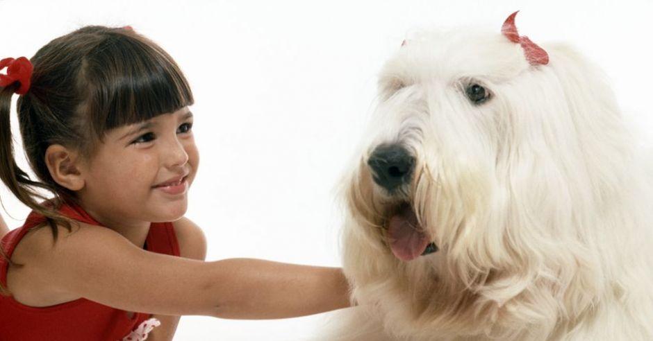 dziecko, zwierzęta, pies, dziewczynka