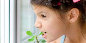 dziewczynka, kwiat doniczkowy