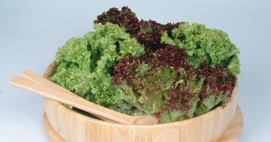 edipresse.salata kedzierzawa (05).jpg