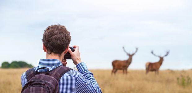 fotograf dzikiej przyrody