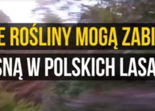 Groźne rośliny w polskich lasach