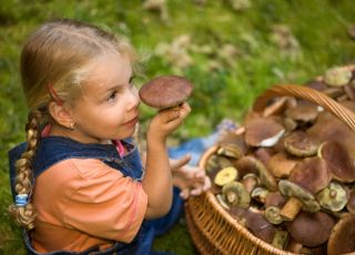 grzyby dla dzieci