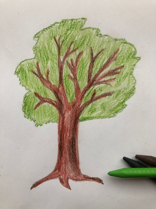 jak się rysuje drzewo