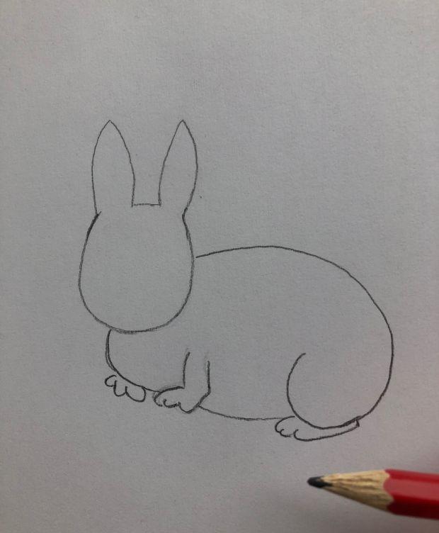 królik rysunek