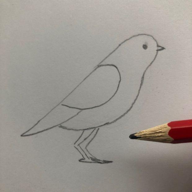 jak się rysuje ptaka