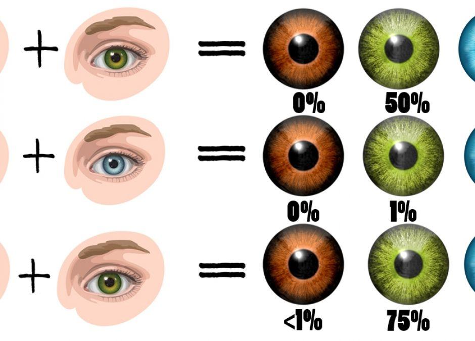 Jaki kolor oczu będzie miało twoje dziecko? zestawienie