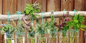 Jaki syrop ziołowy na mokry kaszel u dzieci?