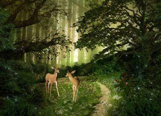 jelonki w lesie