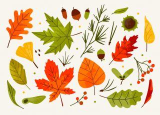 jesień kolorowanki