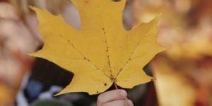 jesień, liść, dziecko