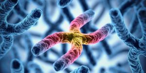 kariotyp, chromosomy, DNA, badanie genetyczne, geny, badanie kariotypu, in vitro, poronienie