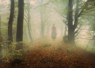 kobieta, las, tajemnica