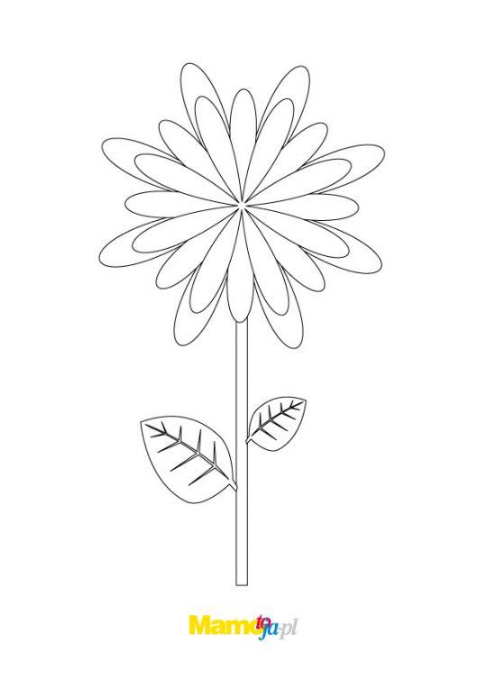 kolorowanki kwiaty stokrotki