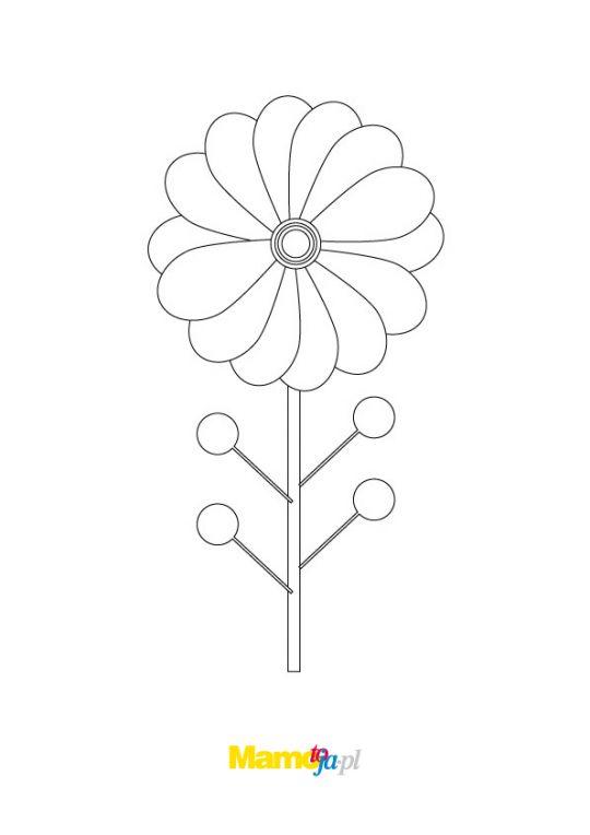 kwiaty kolorowanki stokrotka z drobnymi płatkami