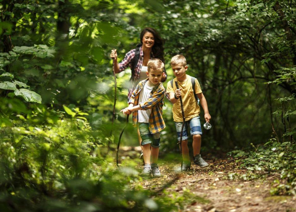 koronawirus mozna iść do lasu