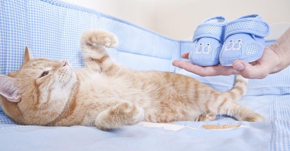 Kot, ciąża, toksoplazmoza