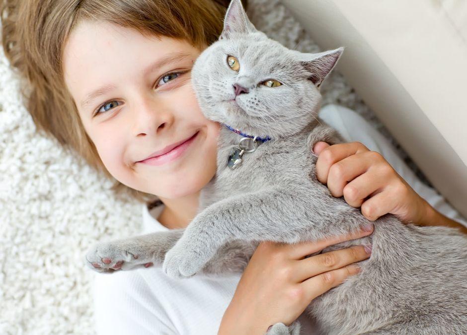 koty dla alergików