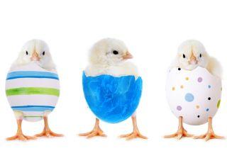 kurczaki, Wielkanoc, święta, pisanki