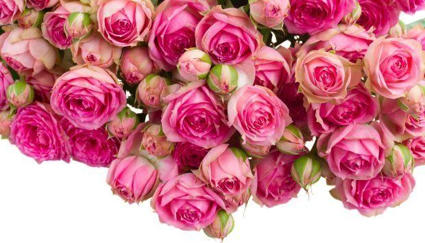 Róża - imię dla dziewczynki